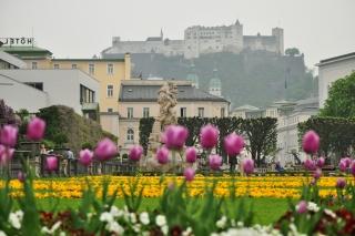 Зальцбугр в мае