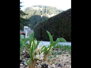 Весна в долине